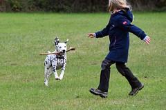 DSC_2704 (Joachim S. Mller) Tags: hund dog hunde dogs tier animal freilaufflchefrhunde hundespielwiese freilaufflche brgerparknord brgerpark darmstadt hessen deutschland germany