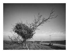 Nest ! (eduardo.mazzeo) Tags: nest nido camino road monocromo monochrome blancoynegro enlaruta