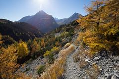 Der Weg ist das Ziel (Sven Vietmeier) Tags: automne derborence lärche mélèzes rando schweiz suisse switzerland valais wallis wanderung randonnée lã¤rche mã©lã¨zes randonnã©e