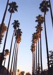 Promenade (Manto Prestipino) Tags: palms city sky sun summer 35mm nikon kodak