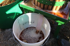 Fresh apple juice from an apple press (Local Food Initiative) Tags: permaculture apple day apples press pressing cider group sustainable orchard juice fresh pressed