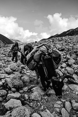 A Long Walk Home (cody.waldon) Tags: blackandwhite blackwhite basecamp everest ebc nepal people detail landscape gorakshep dingboche outdoor outdoors mountain mountains rocky riverbed trekking travel trek trail xt1 fuji