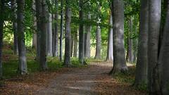 Sigtuna (L Welin) Tags: sigtuna 2016 rosersberg rosersbergs slott path paths fagus sylvatica bok bokskog