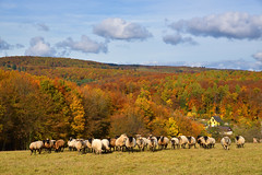 L'automne (Excalibur67) Tags: nikon d750 sigma 24105f4dgoshsma paysage landscape automne autumn alsace forest forts vosgesdunord globalvision