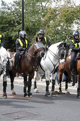 Police horses on crowd control before the match (Ian Press Photography) Tags: ipswich town football club portman road suffolk norwiich city fc 999 police emergency service services match old farm derby championship norfolk horses crowd control before horse mounted