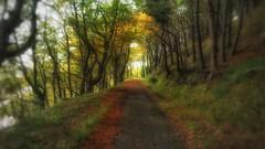 Autumn Walk (kevinmcnair) Tags: scotland fife limekilns woodlandwalksscotland woodlandwalks woodland charlestown leafylane leaves autumn thegelletrock broomhall broomhallestate
