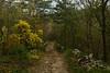 Lungo i sentieri del Carso (paolo-p) Tags: alberi trees linee lines carso trieste