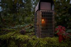 (_Callisto_) Tags: sony a6000 ilce6000 walimex 12mm moos moss lampe lamp kerze candle laterne lantern schummrig dim woozy samyang