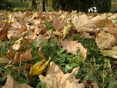 2016-10-25-7268 (vale 83) Tags: autumn leaves nokia n8 friends macrodreams lunaphoto colourartaward coloursplosion