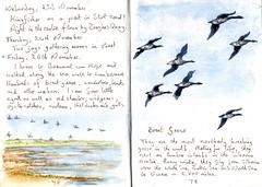 Brent Geese - EXPLORED (Hornbeam Arts) Tags: art sketch essex birds marsh landermere beaumont walton naze branta