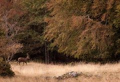 Fombec ... (Pierrotg2g) Tags: nature paysage landscape cerf vercors pnr ambel nikon d90 tamron 70200 forest fort automne autumn