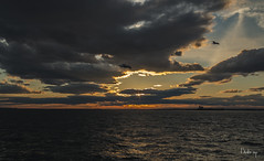 AUTUMN SUNSET (BUSTER NYC) Tags: sun water clouds sky sunset gulls harbor boat autumn