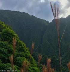 IMG_4222.jpg (ttrumpeteric) Tags: kalalautrail napalicoasttrail travel kauai kapaa hawaii unitedstates us