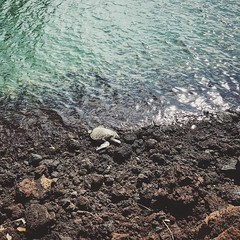 This turtle was just chillin'  (jc_iverson (Imagery by Jordan)) Tags: instagram iphone iphoneography imagerybyjordan square iphone5 cameraphone photo jordaniverson