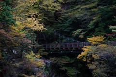 31Mitarai Valley (anglo10) Tags:   japan    valley autumnleaves   bridge