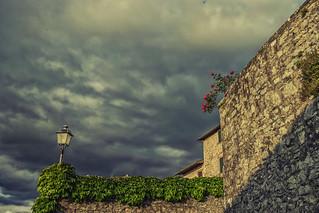 Roses in Radda