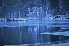 IMG_0208 (www.ilkkajukarainen.fi) Tags: vesi jrvi lake suomi finland uusimaa eu europa scandinavia uuusimaa talvi j avanto luonto nature winter puut threes ranta ice cold freezing jtyy
