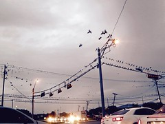 Intersection {337/366} (therealjoeo) Tags: intersection traffic birds grackles texas sky clouds storm car rushhour 365 365project 366