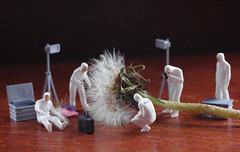 CS1 - Botanical (Hugobian) Tags: world people macro miniature little scene dandelion seeds crime tiny investigation slinkachu
