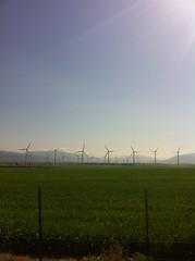 the wind (Sunrise Projector) Tags: cdiz thewind copilotshots