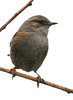 DSC_7512 (PeaTJay) Tags: gardenbirds carlsbirdclub