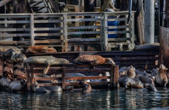 Crash Pad (MPnormaleye) Tags: ocean sea urban cute water animals docks harbor seaside funny waterfront piers pillar seal utata seashore animalplanet hdr beasts