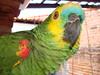 Meu grande amigo (Aldimar Batso) Tags: amigo louro papagaio sonydscw90
