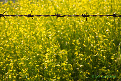 Linea di confine (Danilo Alcidi) Tags: verde green nature field countryside wire natura campagna campo borderline lineadiconfine filodiferro
