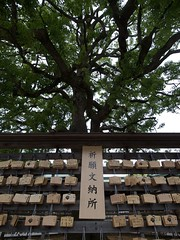 Prayer to Heavens (pilvibongari) Tags: wood tree japan tokyo shrine plates prayers meiji meijijingu