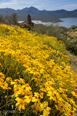 Bartlett Lake wildflowers (6 of 8).jpg (paulgillphoto) Tags: