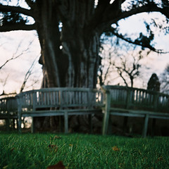 a lasting commitment (still~positive) Tags: tree bench mju marriage olympus fujifilm