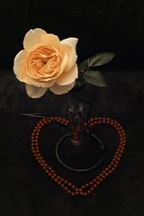 Rose (23) (arfi_arfi) Tags: plant flower love beauty rose vintage flora heart pearls retro rosepetals feelings whiterose