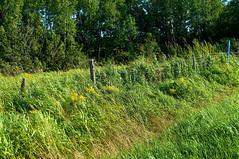 Dans le champ (bob august) Tags: summer nikon champs t aot cloture d90 roberval lacstjean nikkor1735mm nikond90 aperture3