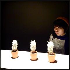 snowbeards (troutfactory) Tags: cactus art japan digital cacti square artwork 日本 kansai 関西 conceptualart 堂島 ipod5 dojimariverforum hipstamatic 堂島リバービエンナーレ2013 dojimariverbiennale2013