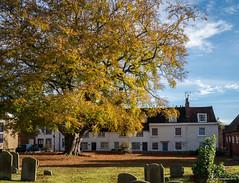 Ancient Beech (Mr Aylesbury) Tags: autumn churchyard graves panasonic cottages 2016 buckinghamshire tree uk bucks stmaryssquare beech england lumix dmcgx8 karlvaughan aylesbury