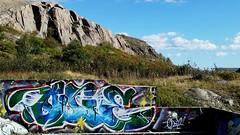Contrast - Nature VS Graffiti - 266 / 366 Project (Tina Dean) Tags: 365project 366project 365project2016 366project2016 graffiti signalhill stjohns imagesfromtheshutter tinamdean tinadean tmdean tinagfw