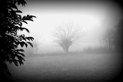 g'el so (pianlux) Tags: gelso albero campagna biancoenero bn tree solo