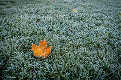 Lone falen leaf in a field of frost - Upper Canada College school field (Phil Marion (57 million views - thank you all)) Tags: canadian kids 5photosaday beautiful cosplay candid beach woman girl boy teen  schlampe      desnudo  nackt nu     nudo   kha upskirt   malibog    hijab nijab burqa telanjang   tranny  nude naked sexy   chubby young nubile phat cleavage slim plump sex slut nipples ass hot xxx boobs dick balls tits fat