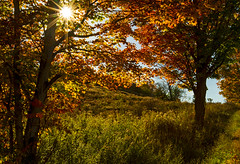 Thursday Thoughts (Matt Champlin) Tags: fall autumn quote quotes life hope humanity nature landscape beautiful indiansummer peace peaceful home canon 2016 tree maple foliage sunstar