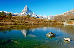 Leisee (welenna) Tags: alpen autumn alps animals switzerland snow schwitzerland schnee sky see swiss stone berge blue mountains mountain matterhorn schnauzer leisee view landscape lake light dog hund wasserspiegel water wasser relief reflection reflexion