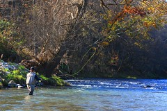 fly fishing in Allamakee Co. IA 854A7422 (lreis_naturalist) Tags: fly fishing allamakee county iowa larry reis