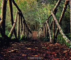 Into the woods (4emmephotography) Tags: woods wood wild nature landscape beauty free bridge ponte passerella legno foresta centrogeograficoditalia umbria italia italy centre intothewoods walking walk tracking