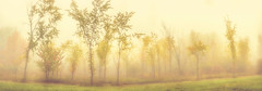 Technicoloured Fog **Explored** (flashfix) Tags: october072016 2016 2016inphotos nikond7000 nikon ottawa ontario canada 55mm300mm panorama landscape woods nature mothernature autumn fog mist morning fall trees grass orange yellow leaves
