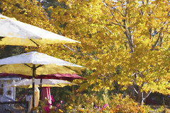 Celebration of fall (Exdeltalady) Tags: umbrellas fall autumn park colors cafe topaz impressionism painting bigbearlake