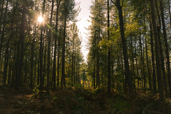 Autumn Exploring (Warwick Tams) Tags: lens flare delamere forest shadow silhouette sun trees woods