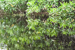 RIFLESSI   ---   REFLECTIONS (cune1) Tags: africa cameroon foresta forest natura nature acqua water fiume river nikond700 panorama landscape