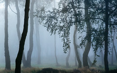 Voices from the Forest (J C Mills Photography) Tags: peakdistrict derbyshire autumn stantonmoor trees mist fog birch landscape england uk