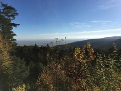 Blick von der Hohen Loog (Wuppataler) Tags: mtb mountainbike neustadt weinstrasse herbst autumn pfälzer wald haardt hohe loog