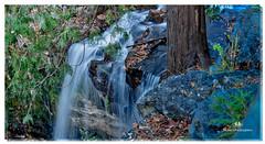 NOVEMBER 2016  NM1_2002_016733-3-22 (Nick and Karen Munroe) Tags: nikon nikond750 nikon2470f28 nickmunroe nickandkarenmunroe nickandkaren munroedesignsphotography munroedesigns munroephotography munroe karenick23 karenick karenandnickmunroe karenmunroe karenandnick hiltonfalls milton ontario canada falls water waterfalls hike hiking forest trees halton haltonhills hiltonfallsconservationarea