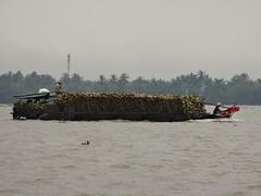 More coconuts (program monkey) Tags: vietnam mekong river delta cargo boat ben tre tra vinh coconuts load full eyes